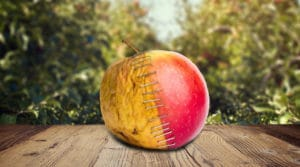 Rotten Fruit in a Lush Garden - The ATT Article You Won't Read Anywhere Else
